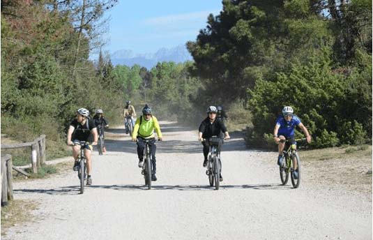 versilia bici pineta viareggio strade bianche