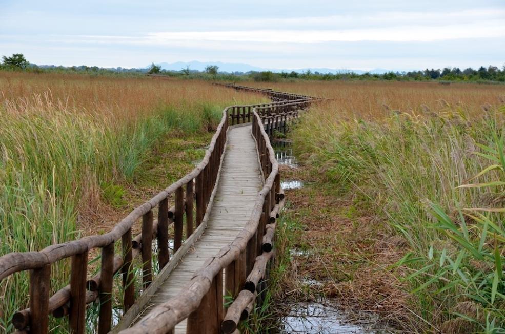 dal Petit alla scoperta dell' oasi Lipu di Massaciuccoli
