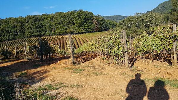 La-Cerreta-Sassetta-vigne